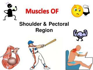 Shoulder & Pectoral Region