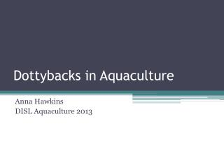 Dottybacks  in Aquaculture