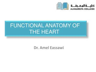 Functional Anatomy of the Heart