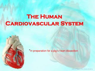 The Human Cardiovascular System