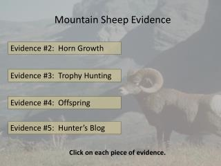 Mountain Sheep Evidence