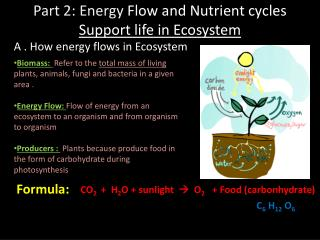 Part 2: Energy  Flow and Nutrient cycles  Support life in Ecosystem