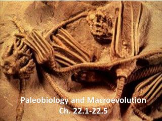 Paleobiology  and Macroevolution Ch. 22.1-22.5