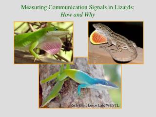 Measuring Communication Signals in Lizards: How and Why