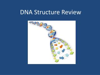 DNA Structure Review
