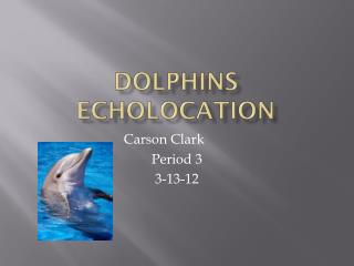 Dolphins Echolocation