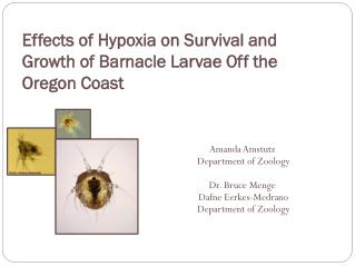 Effects of Hypoxia on Survival and Growth of Barnacle Larvae Off the Oregon Coast