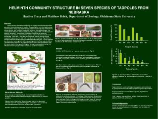HELMINTH COMMUNITY STRUCTURE IN SEVEN SPECIES OF TADPOLES FROM NEBRASKA  Heather Tracy and Matthew Bolek, Department of