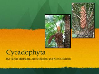 Cycadophyta