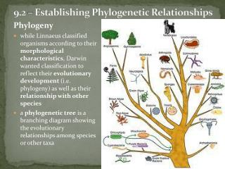 9.2 – Establishing  Phylogenetic  Relationships