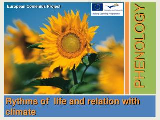 Rythms of  life and relation with climate