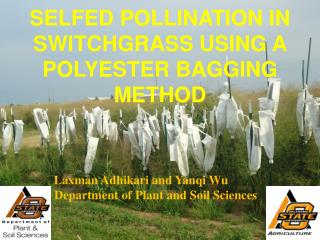 SELFED POLLINATION IN SWITCHGRASS USING A POLYESTER BAGGING METHOD