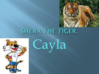 Shera the tiger.