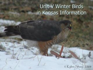 Unit V Winter Birds in Kansas Information