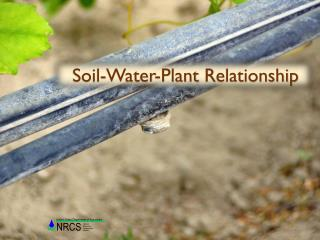 Soil-Water-Plant  Relationship