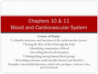 Chapters 10 & 11 Blood and Cardiovascular System