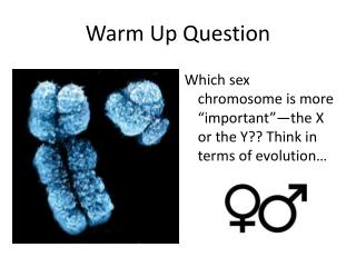 Warm Up Question