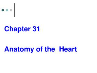 Chapter 31 Anatomy of the  Heart