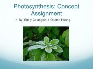 Photosynthesis: Concept Assignment