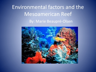 Environmental factors and the Mesoamerican Reef