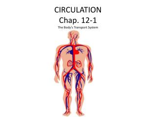 CIRCULATION Chap. 12-1 The Body's Transport System