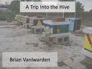 A Trip Into the Hive