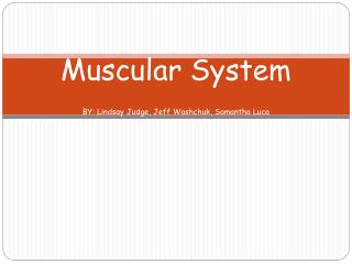 Muscular System BY: Lindsay Judge, Jeff  Washchuk , Samantha Luca