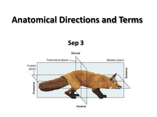 Anatomical Directions and Terms