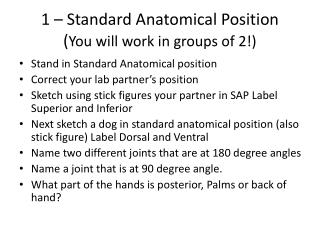 1 – Standard Anatomical Position ( You will work in groups of 2!)