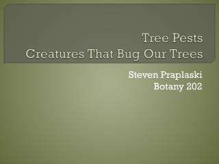 Tree Pests Creatures That Bug Our Trees