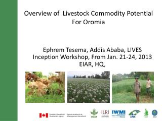 Overview of  Livestock Commodity Potential For  Oromia
