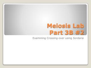 Meiosis Lab  Part 3B #2