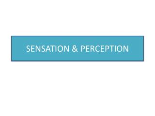 SENSATION & PERCEPTION