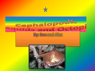 Cephalopods, Squids  and  Octopi