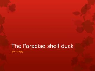 The Paradise shell duck