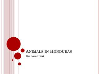 Animals in Honduras