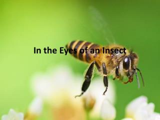 In the Eyes of an Insect