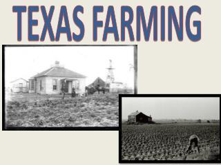 TEXAS FARMING