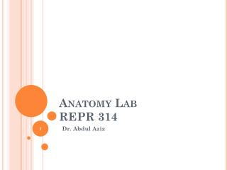 Anatomy  Lab REPR 314