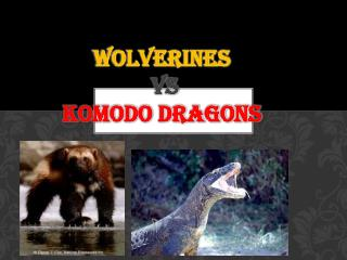 Wolverines vs Komodo Dragons