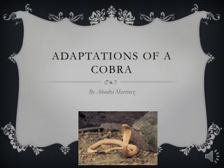 Adaptations  o f a Cobra