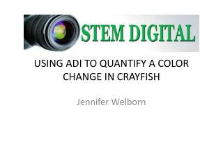 USING ADI TO  QUANTIFY A  COLOR  CHANGE IN CRAYFISH