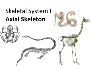 Skeletal System I Axial Skeleton