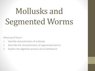 Mollusks and Segmented Worms