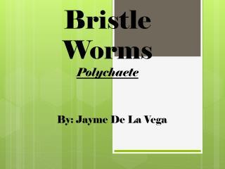 Bristle Worms Polychaete