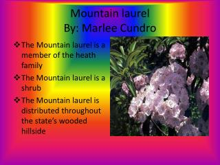 Mountain laurel By:  M arlee C undro