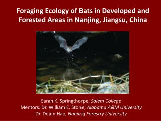 Foraging Ecology of Bats in Developed and Forested Areas in Nanjing, Jiangsu, China