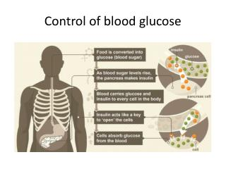 Control of blood glucose