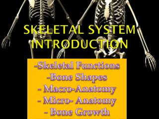 Skeletal System Introduction