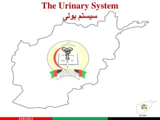 The Urinary System سیستم بولی